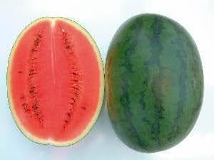 Fruit Seeds - NS 20 WATERMELON