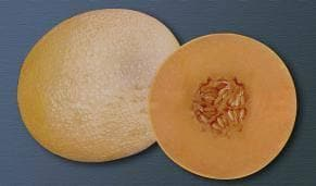 Fruit Seeds - NS 7455 F1 MUSKMELON