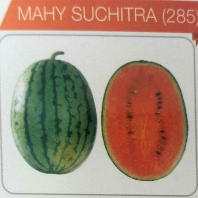Fruit Seeds - SUCHITRA (Watermelon)