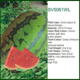 SV5061WL WATER MELON - BigHaat.com