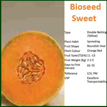 Fruit Seeds - SWEET MUSKMELON