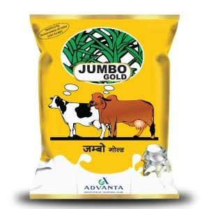 JUMBO GOLD FORAGE (जंबो गोल्ड फ़ोरेज )