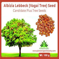 ALBIZIA LEBBECK FRY WOOD (VAGAI SEED) WOMEN'S TONGUE TREE SEED