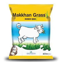 MAKKHAN GRASS - FORAGE ( मक्खन ग्रास फ़ोरेज)