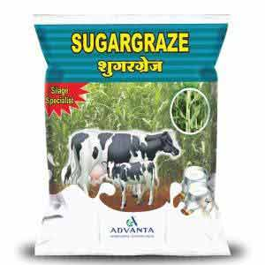 SUGARGRAZE FORAGE (सुगर ग्रेज़)