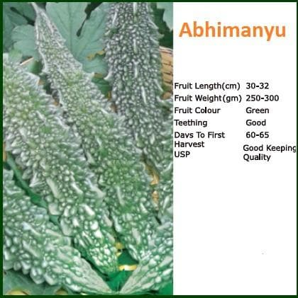 Vegetable Seeds - ABHIMANYU BITTER GOURD