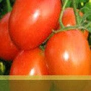 Vegetable Seeds - ABHINAV TOMATO