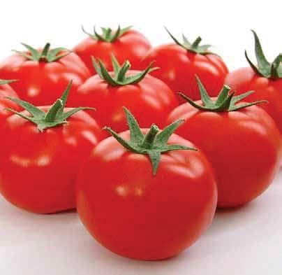 Vegetable Seeds - ADI TOMATO