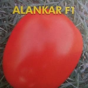 Vegetable Seeds - ALANKAR TOMATO F1