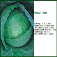 AMPHION CABBAGE - BigHaat.com