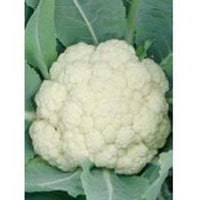 ATISHIGHRA CAULIFLOWER - BigHaat.com