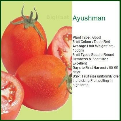 Vegetable Seeds - AYUSMAN TOMATO