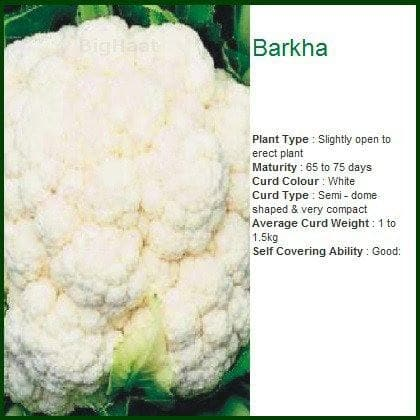 BARKHA CAULIFLOWER - BigHaat.com
