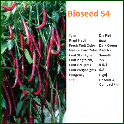 Vegetable Seeds - BIOSEED 54 CHILLI