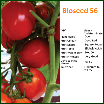 Vegetable Seeds - BIOSEED 56 TOMATO