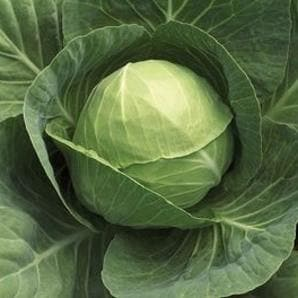 Vegetable Seeds - CABBAGE