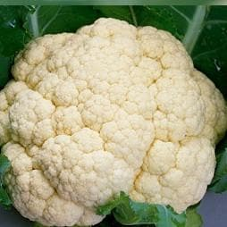 Vegetable Seeds - CAULIFLOWER