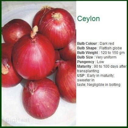 Vegetable Seeds - CEYLON ONION