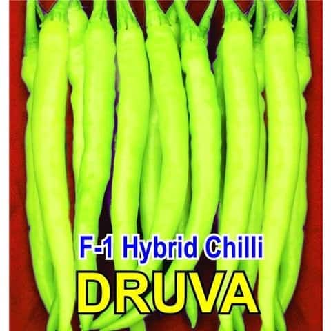 DHRUVA 961 CHILLI - BigHaat.com