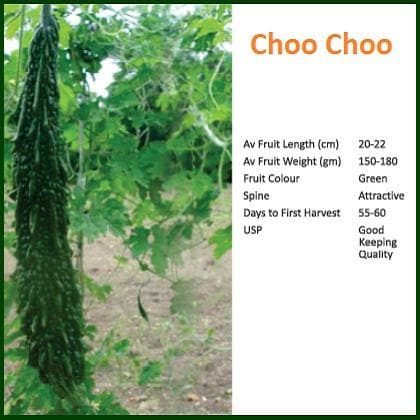 Vegetable Seeds - CHOO CHOO BITTER GOURD