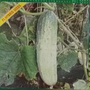 Vegetable Seeds - CUCUMBER