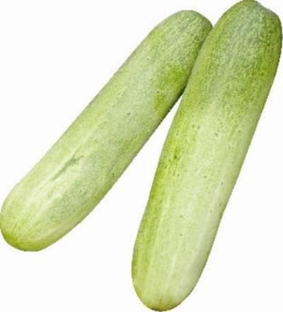 Vegetable Seeds - ENCOUNTER CUCUMBER