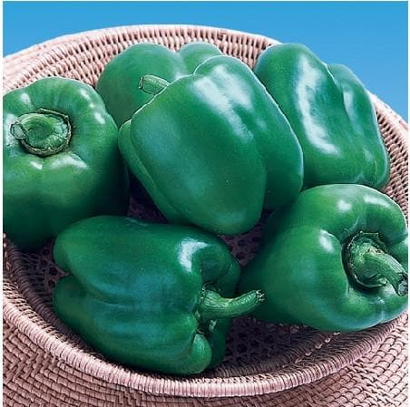 Vegetable Seeds - GANGA CAPSICUM OP (गंगा)