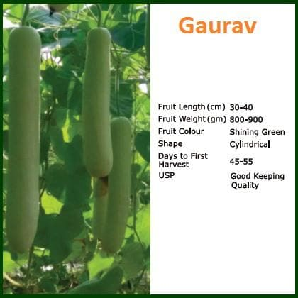 Vegetable Seeds - GAURAV BOTTLE GOURD