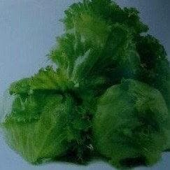 GENERAL LETTUCE - BigHaat.com