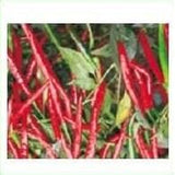 HPH 5531 CHILLI F1 - BigHaat.com
