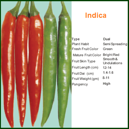 Vegetable Seeds - INDICA CHILLI