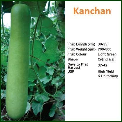 Vegetable Seeds - KANCHAN BOTTLE GOURD