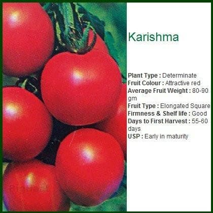 Vegetable Seeds - KARISHMA TOMATO