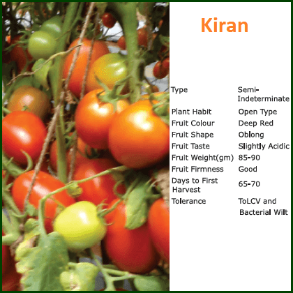 Vegetable Seeds - KIRAN TOMATO