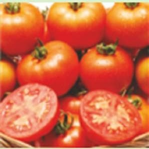Vegetable Seeds - LAKSHMI TOMATO