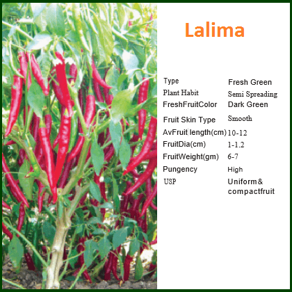 Vegetable Seeds - LALIMA CHILLI