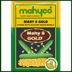 Vegetable Seeds - MAHY 8 GOLD