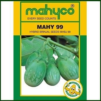 Vegetable Seeds - MAHY 99 - MHBJ-99 BRINJAL