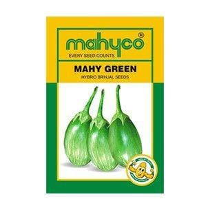 Vegetable Seeds - MAHY GREEN BRINJAL