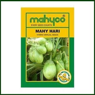 Vegetable Seeds - MAHY HARI-115 BRINJAL
