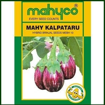 Vegetable Seeds - MAHY Kalpataru-MEBH-10 BRINJAL