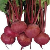 MAHY LAL-II BEETROOT - BigHaat.com