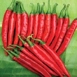 Vegetable Seeds - NS 208 CHILLI