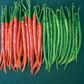 Vegetable Seeds - NS 238 CHILLI