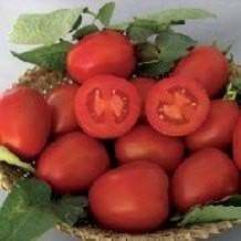Vegetable Seeds - NS 501 TOMATO