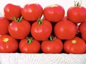 Vegetable Seeds - NS 526 GS TOMATO