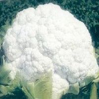 NS 95 CAULIFLOWER - BigHaat.com