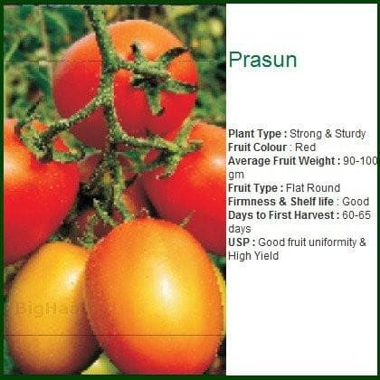 Vegetable Seeds - PRASUN TOMATO