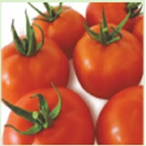 Vegetable Seeds - RAKSHAK TOMATO
