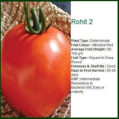 Vegetable Seeds - ROHIT 2 TOMATO